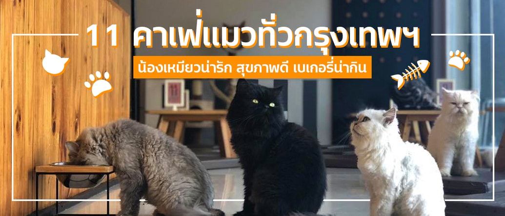 11 Cat Cafés in Bangkok with Friendly Felines & Tasty Treats