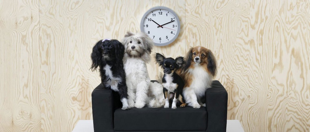 Ikea Lurvig The Brand New Furniture Collection Just For Your Pets